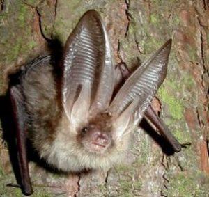 Vleermuis onderzoek Nijmegen